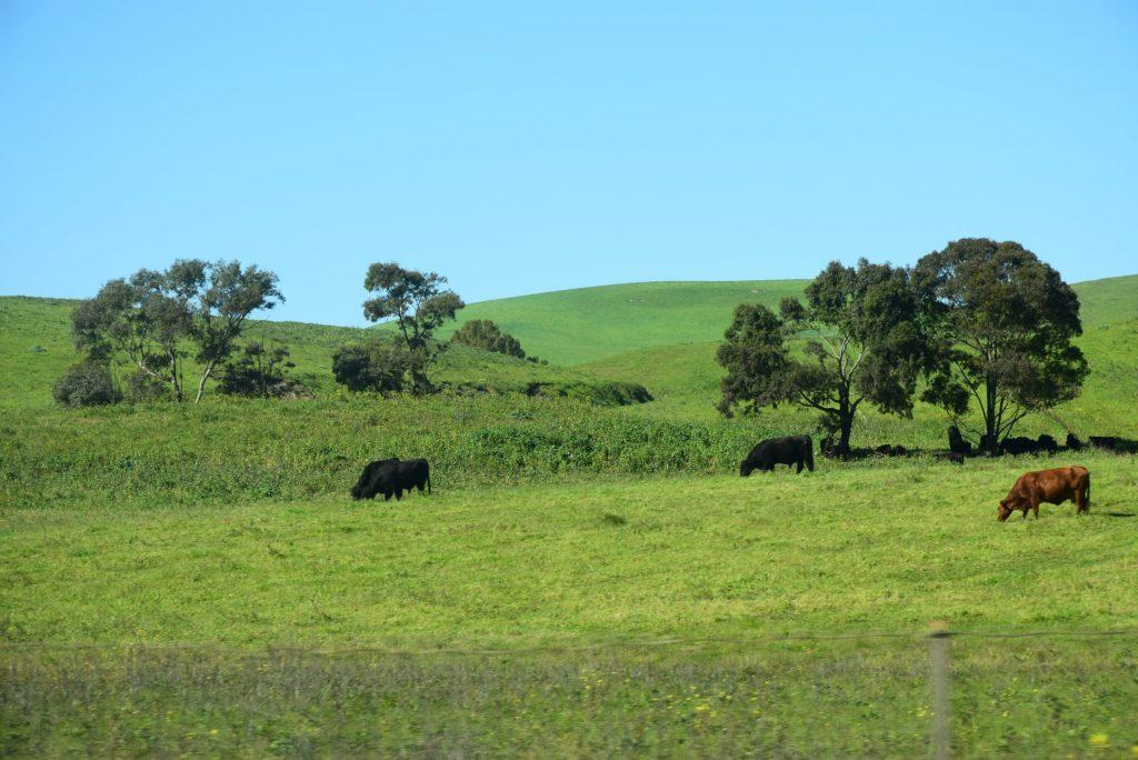 Meadows in Stockton